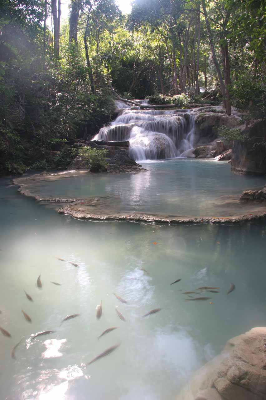 Fish swimming before the first Erawan Waterfall