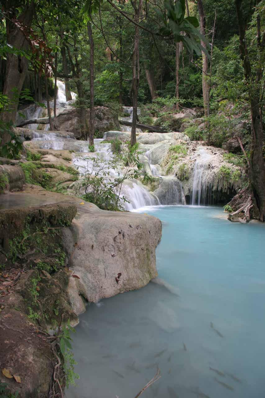 Fish swimming before the sixth Erawan Waterfall