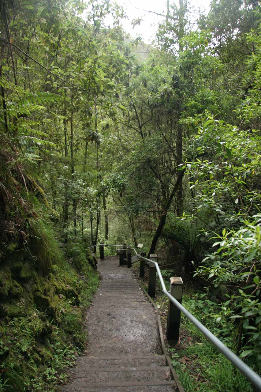 The walkway leading down to the base of Erskine Falls