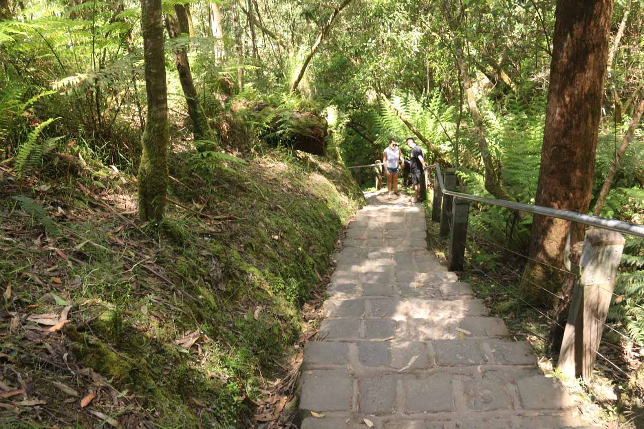 Descending the short track to the base of Erskine Falls