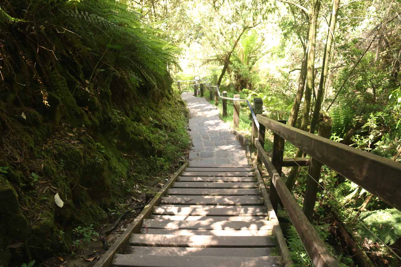 Continuing the descent to the base of Erskine Falls