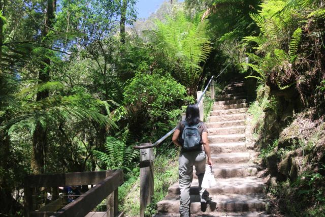 Erskine_Falls_17_026_11182017 - The semi-scrambling path to Straw Falls started on the opening to the left of Julie in this photo