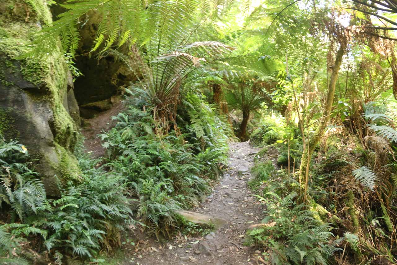 The Straw Falls Track was much narrower, more primitive, and more overgrown than that of the Erskine Falls Track
