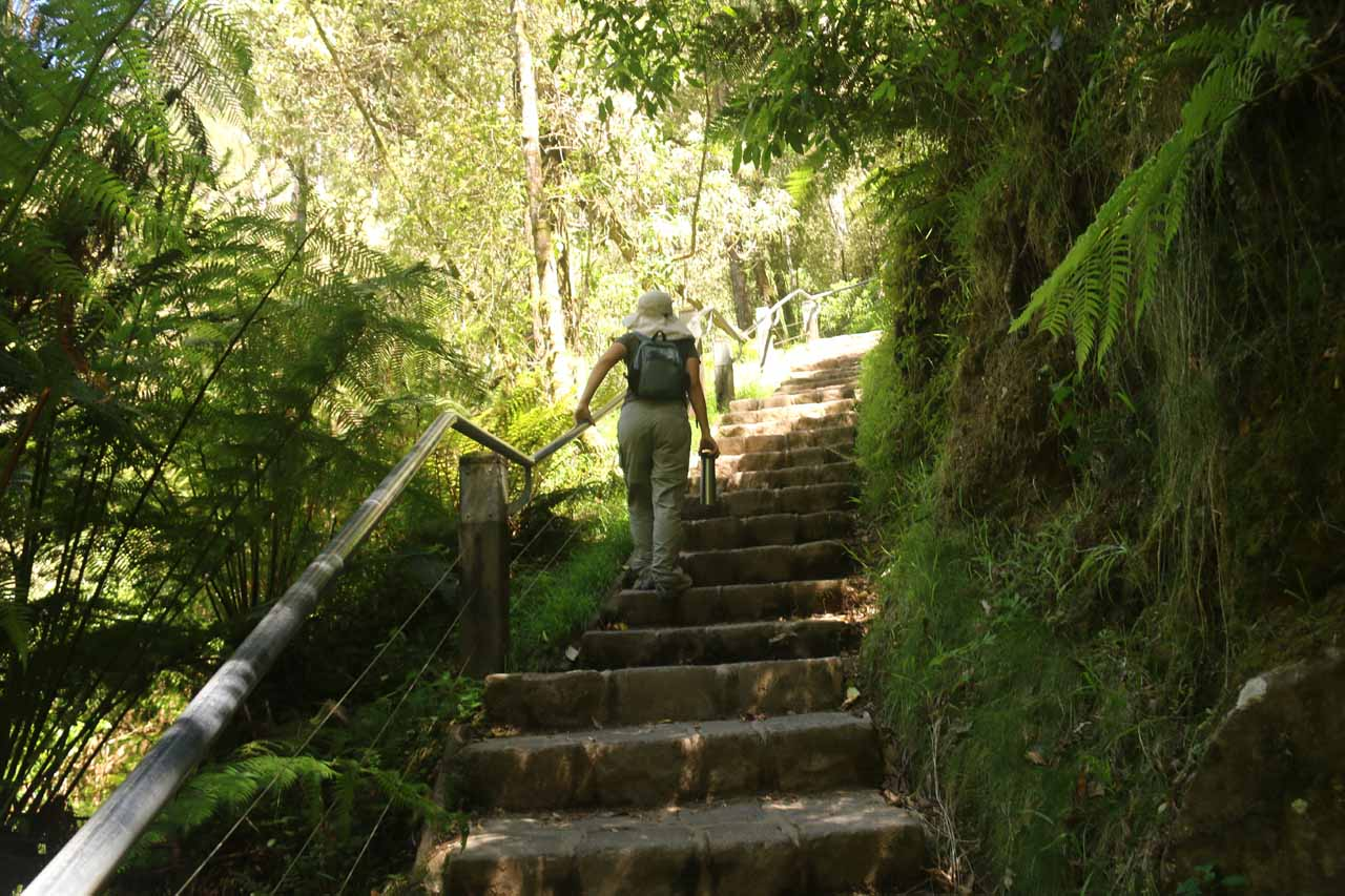 Since Julie was fighting the flu during our 2017 visit to Erskine Falls, she didn't appreciate these steps very much