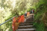 Erskine_Falls_17_068_11182017 - Making our ascent to the car park just as another group of people were making their way down during our November 2017 visit. We couldn't help but notice this orange stuff, which might have been damage as a result of a landslide or something