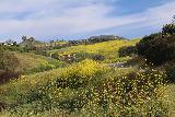 Escondido_Falls_007_04072019 - Looking up the hillside towards some of the homes alongside Winding Way Road as the hills were matted with yellow wildflowers at the start of our April 2019 visit