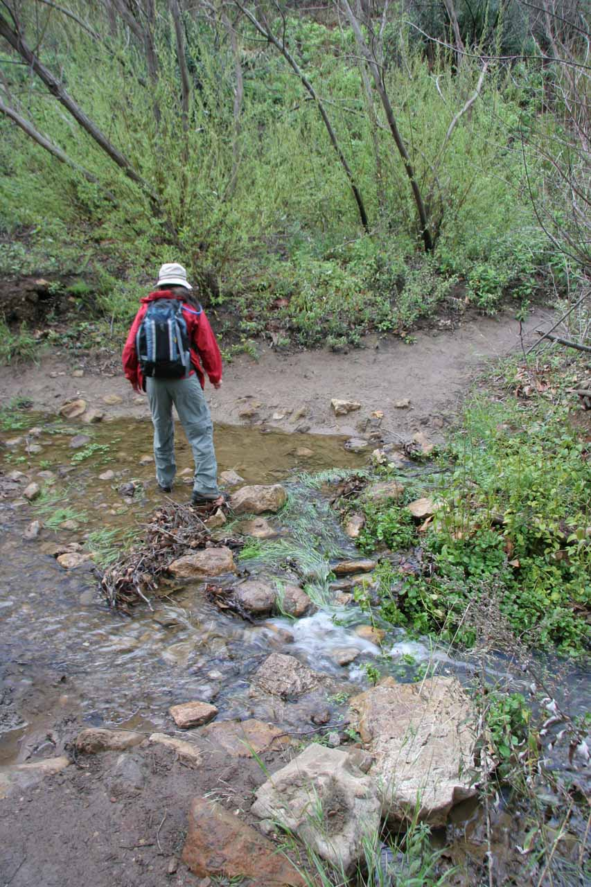 One of five stream crossings we counted