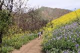 Escondido_Falls_085_04072019 - Continuing along the trail to Escondido Falls flanked by the superbloom during our April 2019 visit