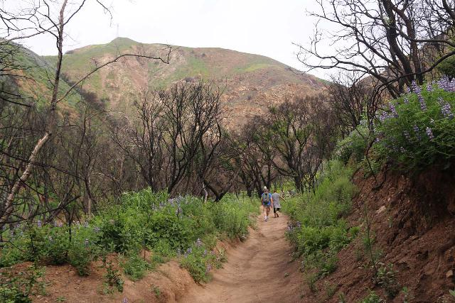 Escondido_Falls_094_04072019 - Passing through an area badly affected by the Woolsey Fire, which burnt most of the vegetation around the Escondido Falls Trail