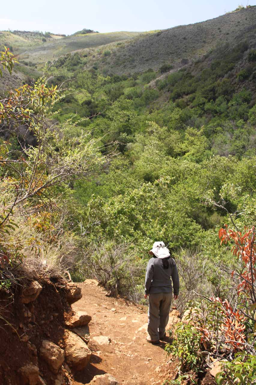 Pretty view of Escondido Canyon during the descent back down from the upper waterfall