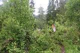 Espelandsfossen_Granvin_023_06252019 - On the somewhat overgrown trail climbing up out of the car park and towards Espelandsfossen