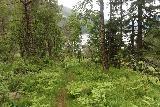 Espelandsfossen_Granvin_064_06252019 - Looking back down at the narrow trail after deciding to turn around near the foot of Espelandsfossen