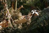 Evercreech_Falls_018_11232006 - Julie scrambling over some fallen tree obstacle