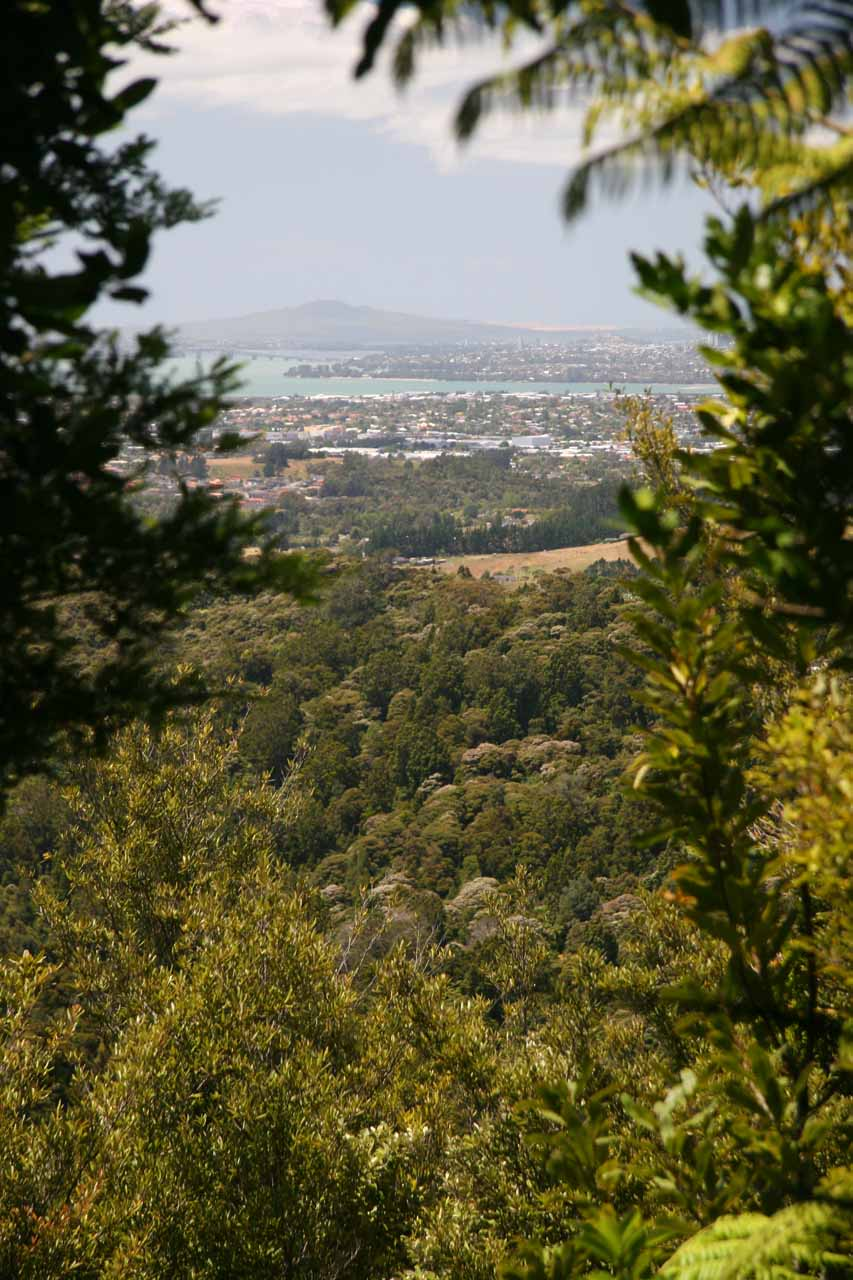 Partial view through an opening in the foliage towards the suburbs of Auckland