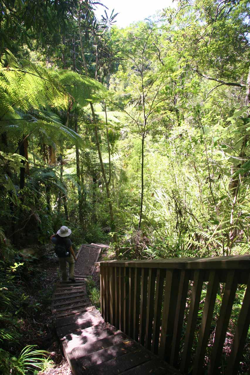 Julie descending down even more steps as we walked alongside Fairy Falls