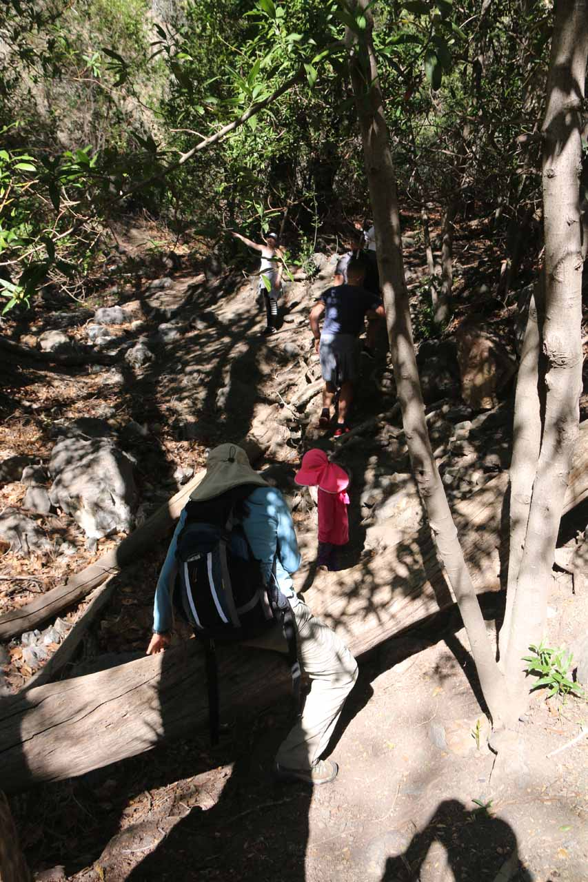 Julie and Tahia climbing over a fallen log while someone in the hiking group spotted a cave across Falls Canyon
