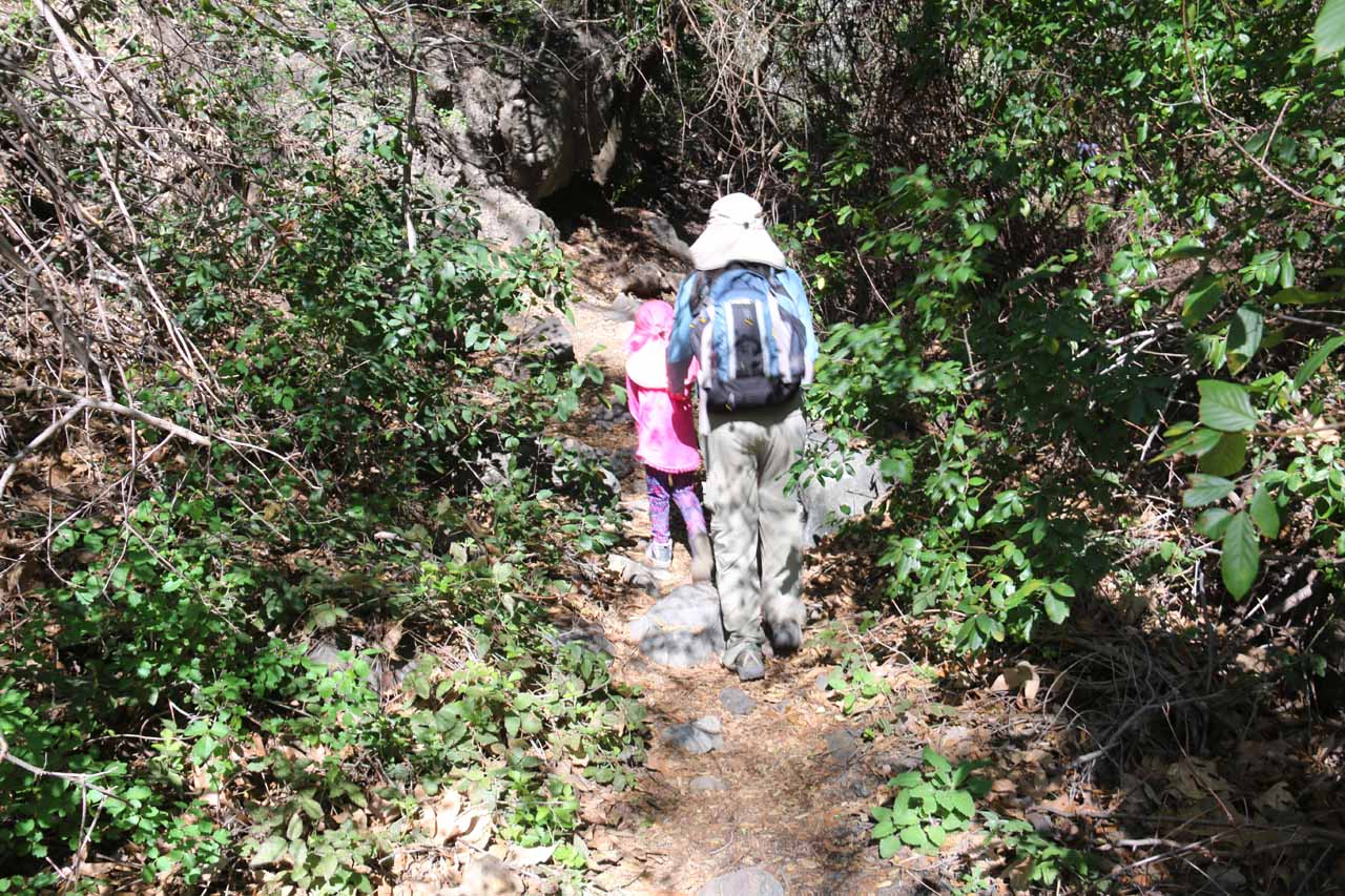 One thing we did have to be careful about was the ubiquitous poison oak within Falls Canyon
