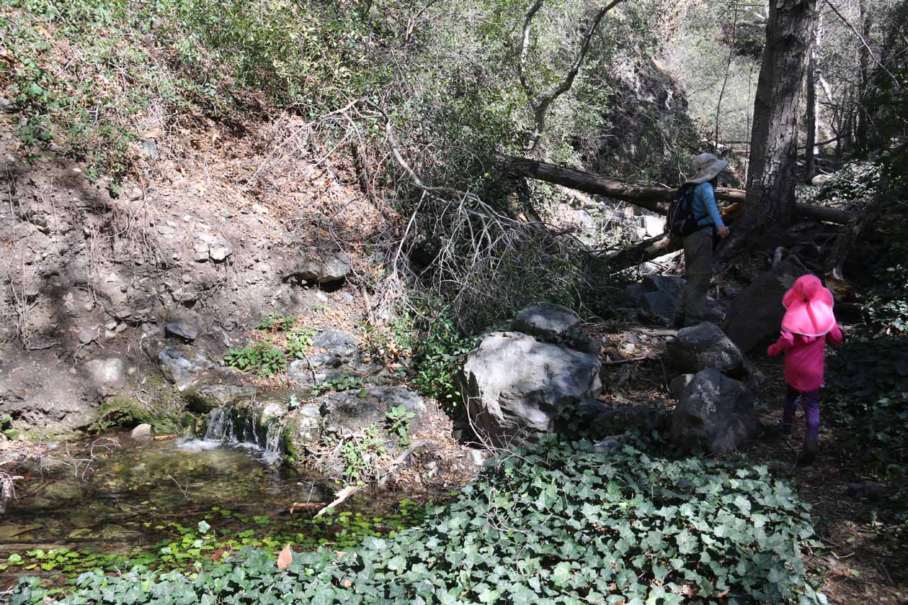 Initially at the mouth of Falls Canyon, there seemed to be hardly any water in the creek, but the further up we went, we started to see stagnant pools, then we started to see flowing water like this mini-cascade