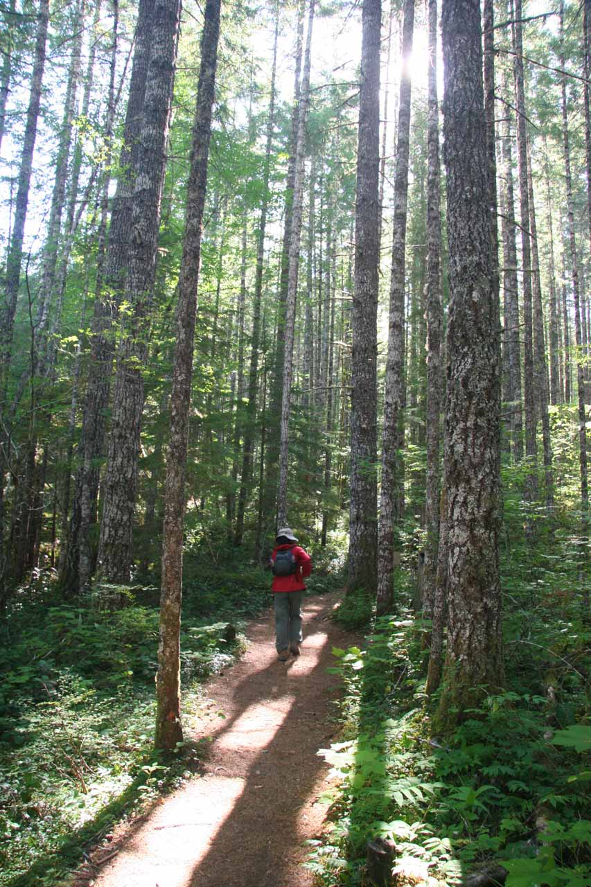 Julie hiking amidst attractively tall trees