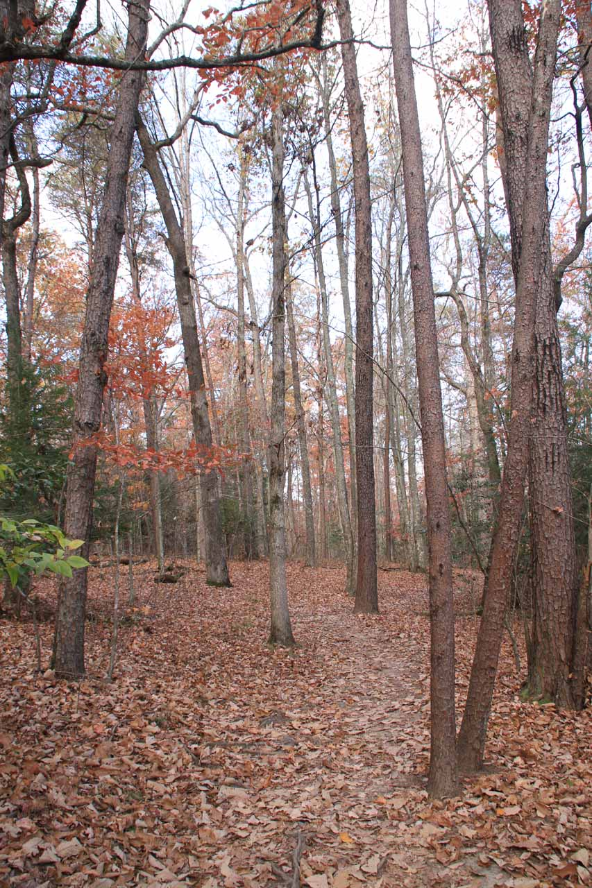 On the leaf-covered trail in pursuit of a better view of Cane Creek Falls
