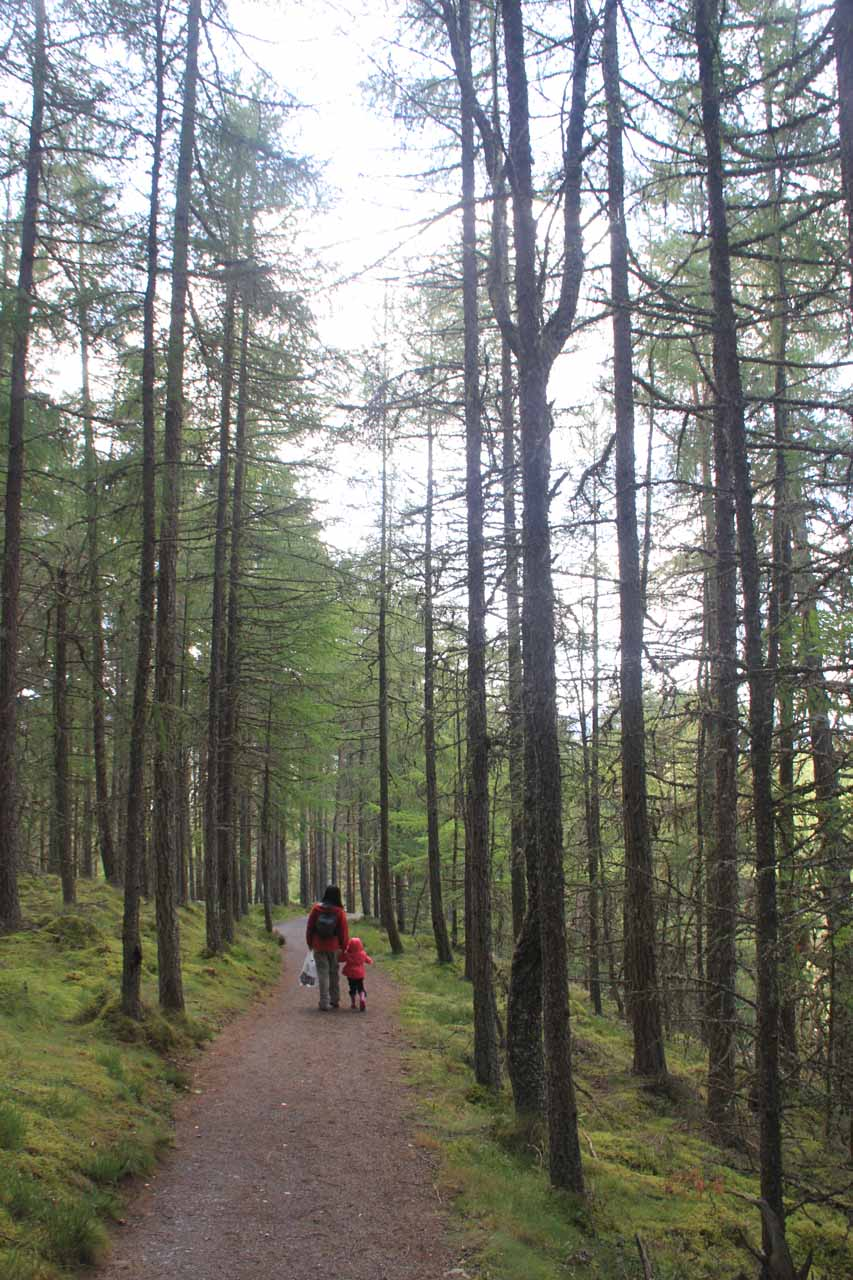 Hiking beneath some tall but thin trees as we were making our way downhill on the other side of the Bruar Water