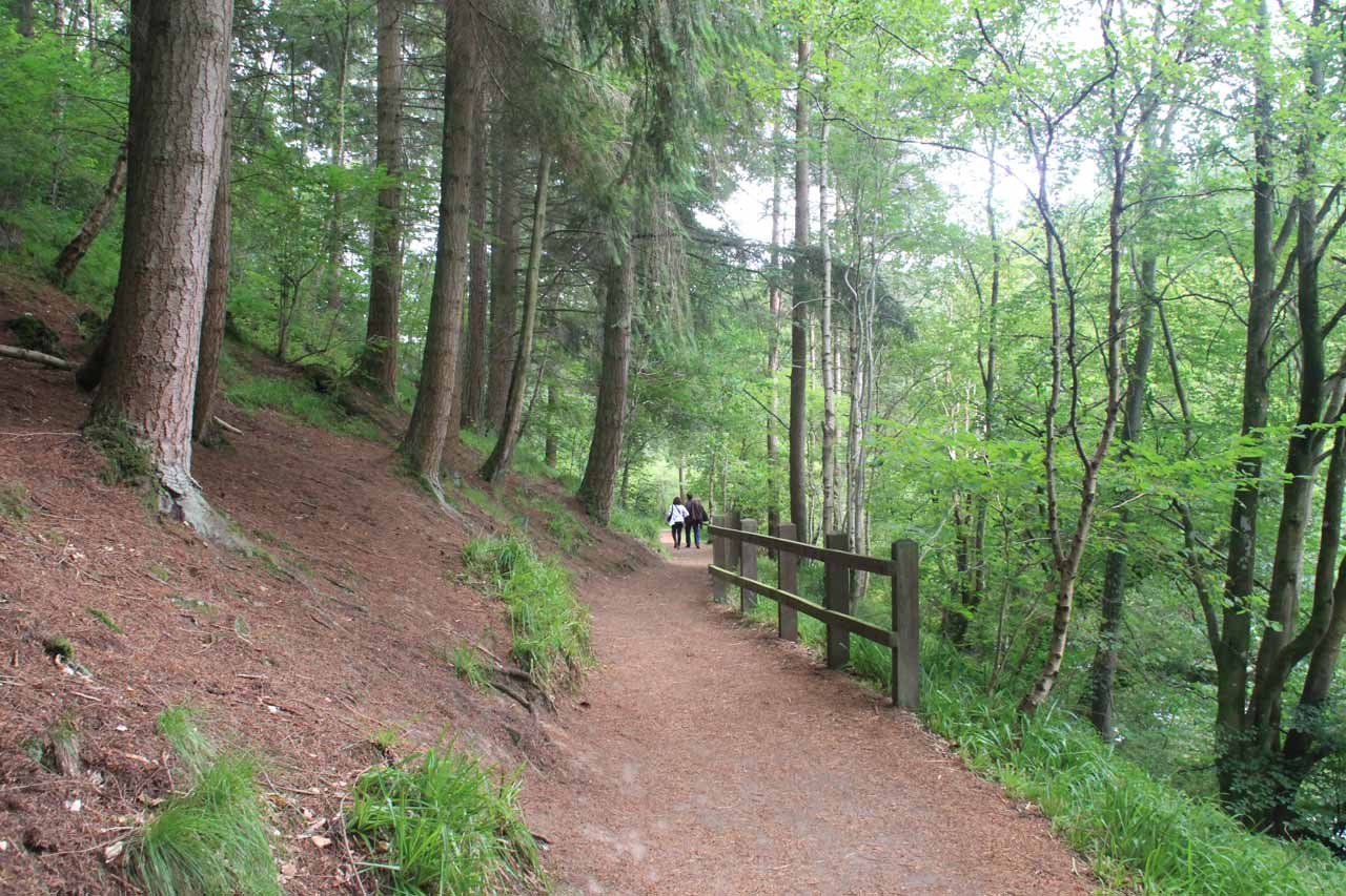 Now the trail went through a more naturesque forest