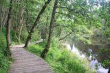 Falls_of_Clyde_031_08202014 - Walking along the reservoir on a boardwalk