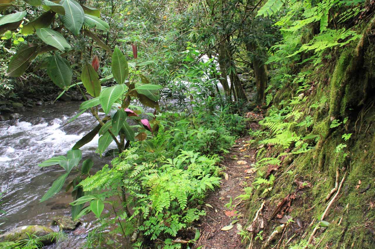 The lower trail along the Fautaua River