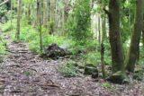 Fautaua_Valley_059_20121214