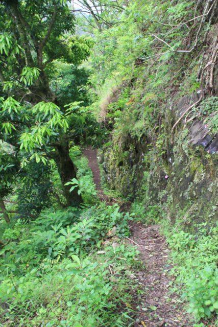 Fautaua_Valley_072_20121214 - The narrow trail beyond the 'bellevue' for the Cascade de Fachoda or the 'Fautaua Waterfall'
