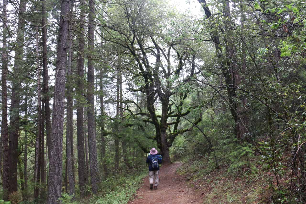 Mom on the initial nearly half-mile stretch from the trailhead to the first junction of the loop trail
