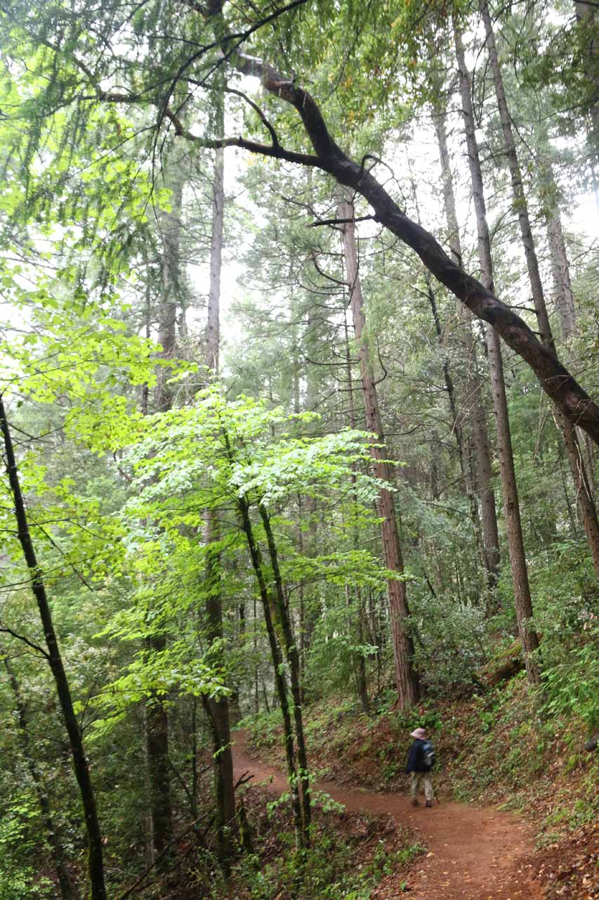 After keeping right at the first loop junction (to do this hike in a counterclockwise manner), the trail gently descended amidst some impressively tall trees. The gentle descent was helpful to my Mom's knees, especially given how cold it was when we got started