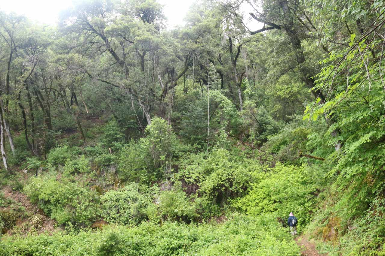When the trail curved into some of the gullies, it was not unusual to see more lushness and higher densities of foliage