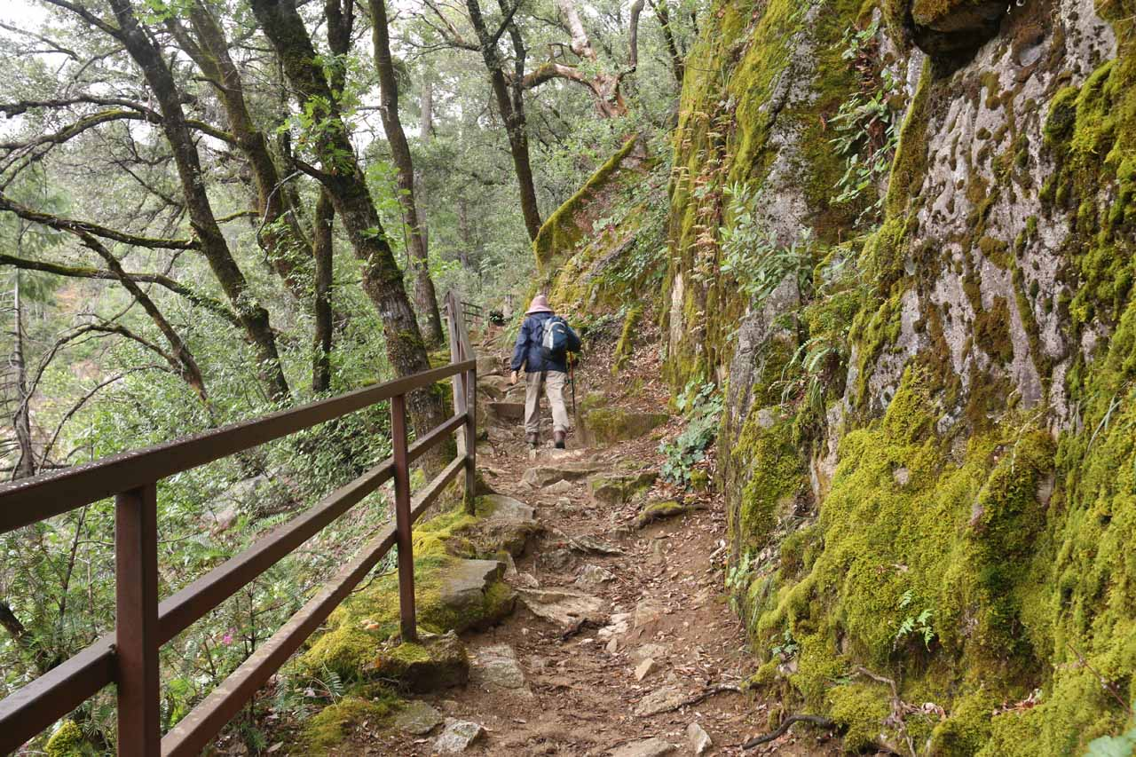 Continuing back up towards the trail junction with the spur trail leading to the top of the waterfall