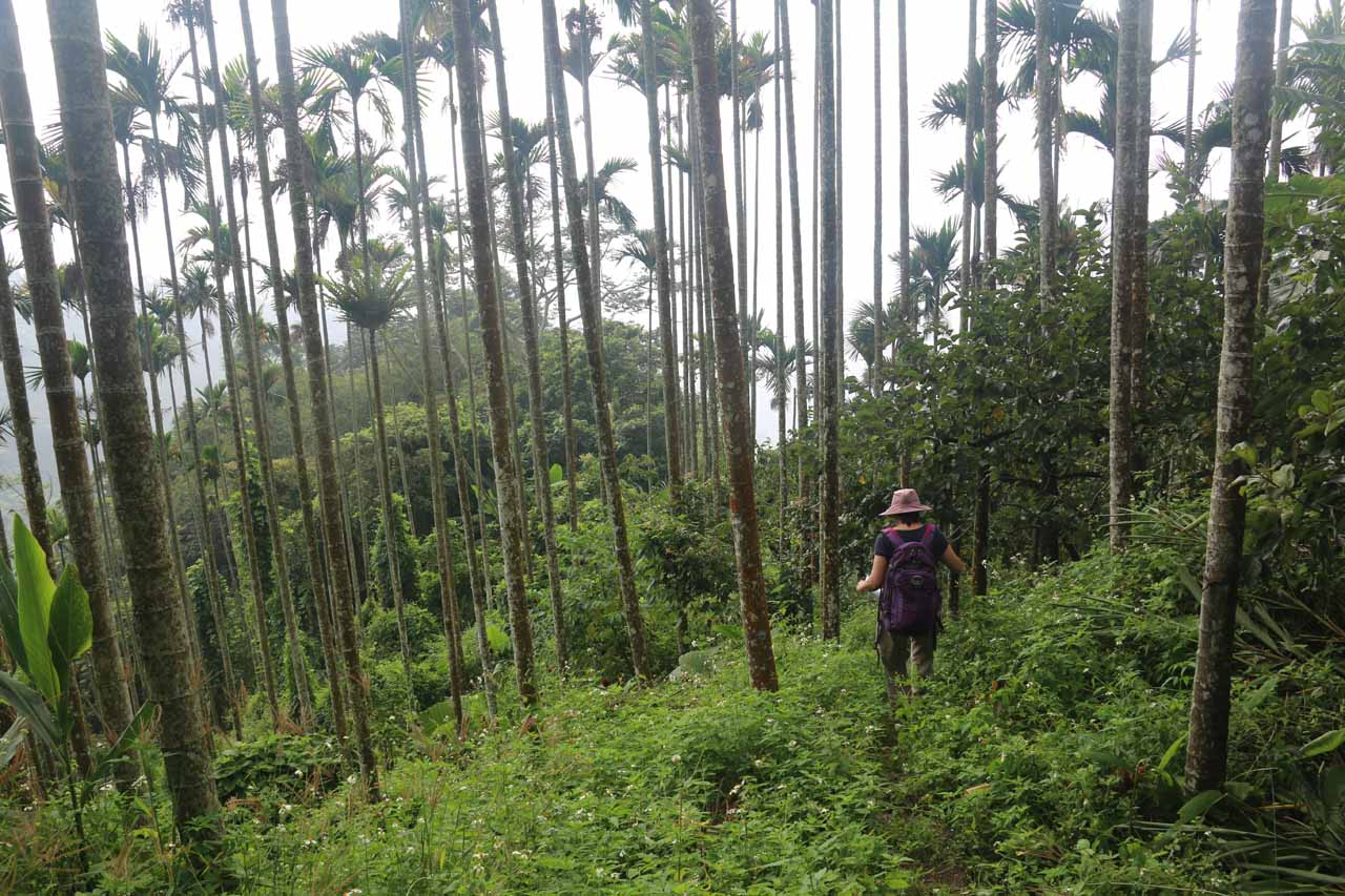 Mom making her way along the somewhat overgrown trail as we passed through a betelnut plantation