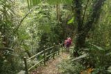 Fenghuang_Waterfall_Chiayi_019_10302016 - Mom continuing the long descent to the Fenghuang Waterfall as the vegetation started to shift from the monoculture betel nut trees to more local jungle flora