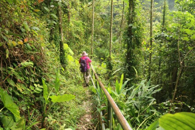 Fenghuang_Waterfall_Chiayi_036_10302016 - Mom continuing to descend to the Fenghuang Waterfall as the vegetation shifted from betel nut tree plantations to more local jungle flora
