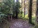 Fern_Canyon_Gold_Dust_Falls_008_iPhone_11212020 - This was the junction where the Fern Canyon adventure would rejoin the James Irvine Trail.  I took this way back down into Fern Canyon just to see what the section that we had missed earlier was like
