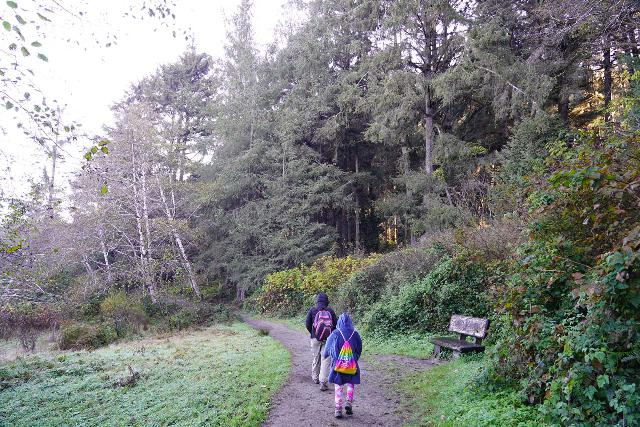 Fern_Canyon_Gold_Dust_Falls_026_11212020 - The Fern Canyon experience started with a brief 0.2-mile stretch along the Davidson Trail where it traversed through open scenery with crashing waves heard in the distance and moss-covered trees and ferns flanking one side of the footpath