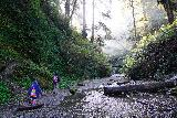 Fern_Canyon_Gold_Dust_Falls_030_11212020 - Julie and Tahia hiking into Fern Canyon after already making unbridged crossings of Home Creek