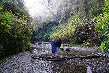 Fern_Canyon_Gold_Dust_Falls_033_11212020 - Julie and Tahia making another one of several unbridged crossings of Home Creek within Fern Canyon
