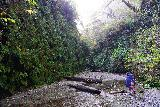 Fern_Canyon_Gold_Dust_Falls_035_11212020 - Tahia approaching another unbridged crossing of Home Creek in Fern Canyon