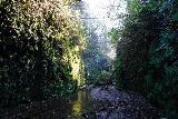 Fern_Canyon_Gold_Dust_Falls_038_11212020 - Looking ahead at the scenic Fern Canyon with some incident lighting from the rising sun on the morning of our hike