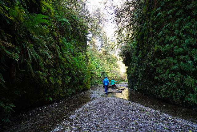 Fern_Canyon_Gold_Dust_Falls_039_11212020 - Fern Canyon can be a wet experience even late in the Autumn Season like what's shown here.  So imagine how much wetter it would be when Home Creek flows higher in the Winter and Spring