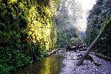 Fern_Canyon_Gold_Dust_Falls_042_11212020 - Julie and Tahia approaching yet more unbridged crossings of Home Creek as Fern Canyon continues to get more scenic