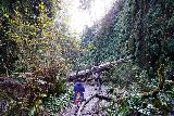 Fern_Canyon_Gold_Dust_Falls_047_11212020 - Julie and Tahia going by some streak where a seasonal waterfall spilling into Fern Canyon would appear in wetter times