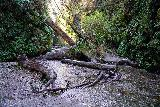 Fern_Canyon_Gold_Dust_Falls_048_11212020 - Looking back at another precarious (without waterproof shoes) crossing of Home Creek
