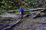 Fern_Canyon_Gold_Dust_Falls_049_11212020 - Tahia exercising her gymnastics skills to balance herself on this log while making another crossing of Home Creek in Fern Canyon