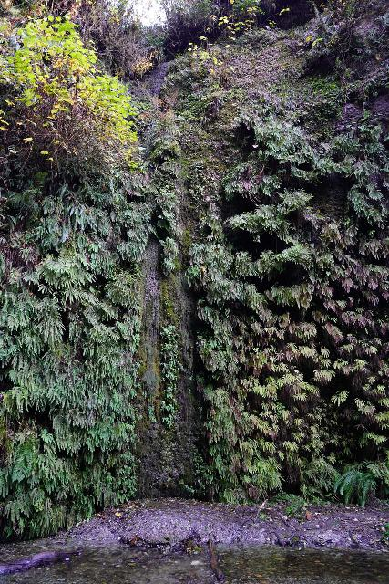 Fern_Canyon_Gold_Dust_Falls_060_11212020 - Looking directly at a noticeable streak in the canyon wall at a particularly dramatic part of Fern Canyon