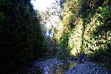 Fern_Canyon_Gold_Dust_Falls_063_11212020 - Julie and Tahia retreating towards the mouth of Fern Canyon, which meant we had to negotiate all those stream crossings again